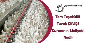 tavuk çiftliği kurmanın maliyeti