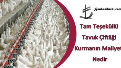 Tam Teşeküllü Tavuk Çiftliği Kurmanın Maliyeti Nedir